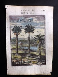 Mallet 1683 Hand Coloured Print. Palmiers. Palms. Indonesia.